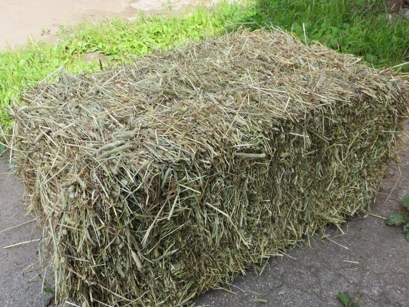 подорвала купить сено в тюках увлекательной историей