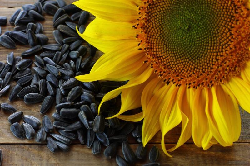 Гибриды, подсолнечника, кукурузы, свеклы