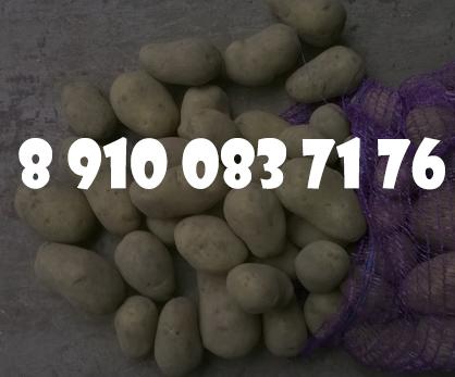 Картофель оптом по 6.50 рубкг