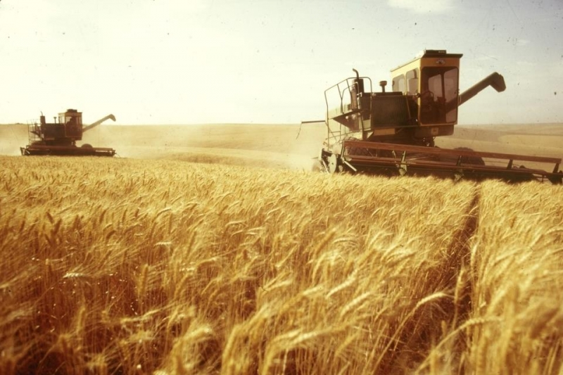Привлекаем инвестиции, оптовая торговля зерном, экспорт. Урожай 2017.