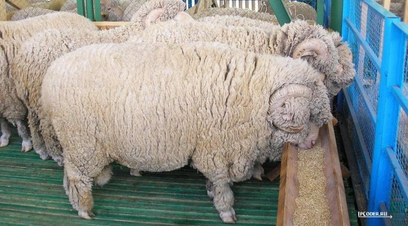 Продажа шкур Овчины и Кенгуру.