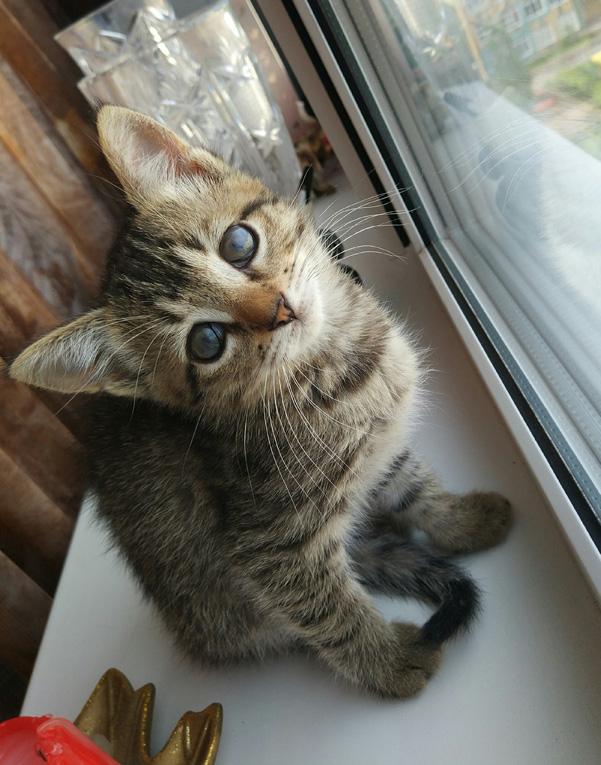 Срочно ищет заботливых родителей самый милый котенок