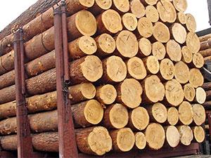 Куплю деловую древесинукругляк