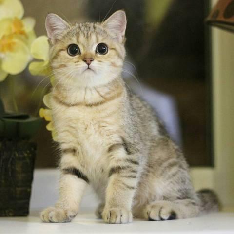 Породистые котята ищут заботливых хозяев.