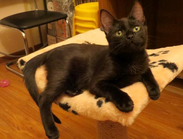 Ласковые пушистики, милейшие домашние котята в добрые руки