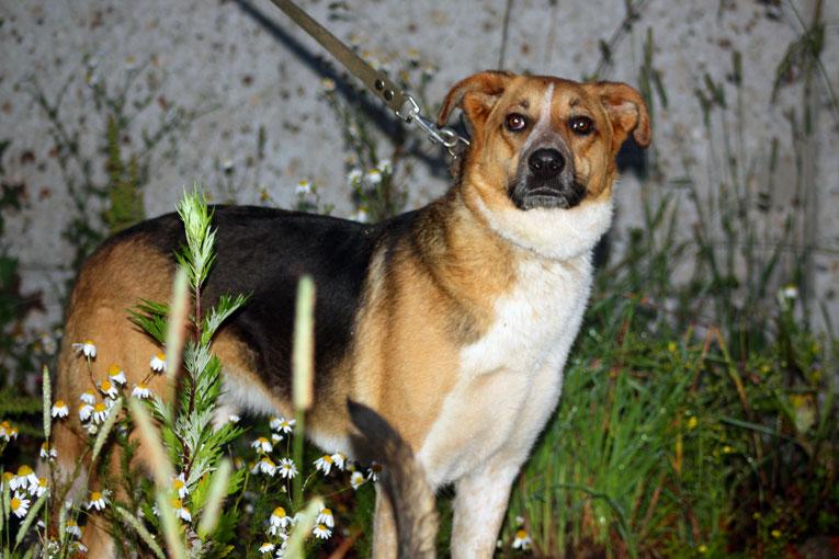 Умнейшая собака Мая в приютской клетке