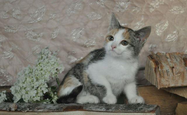 Море позитива Чудесные домашние котята-подростки в добрые руки
