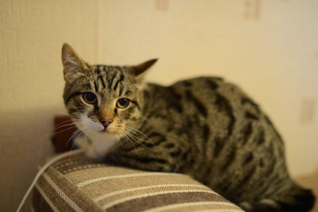 Милейший полосатый обаяшка, котенок-подросток Тиша в добрые руки