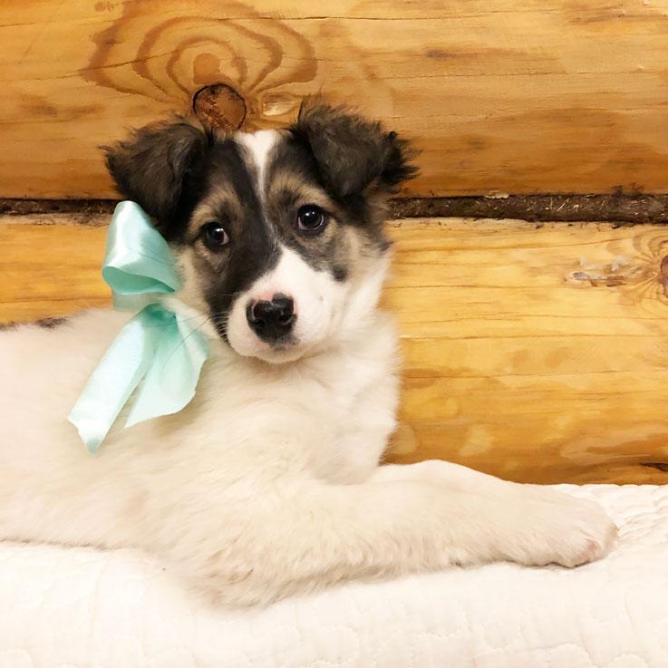 Отдам красивого щенка в дар. Девочка
