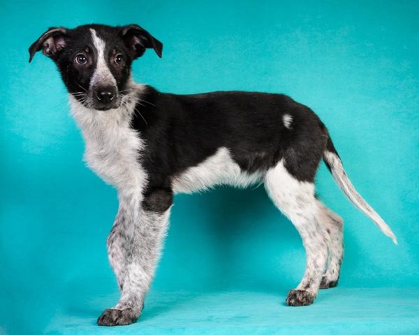 Красавчик Ронни,  домашний щенок-подросток в добрые руки