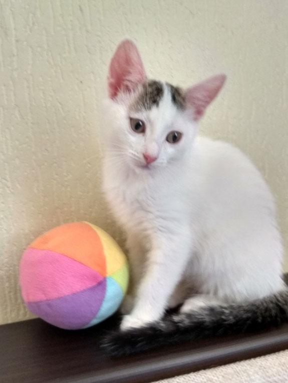 Котнок Снежинка в дар
