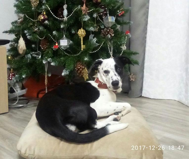 Молоденькая умная собака Кира в дар. Обожает детей