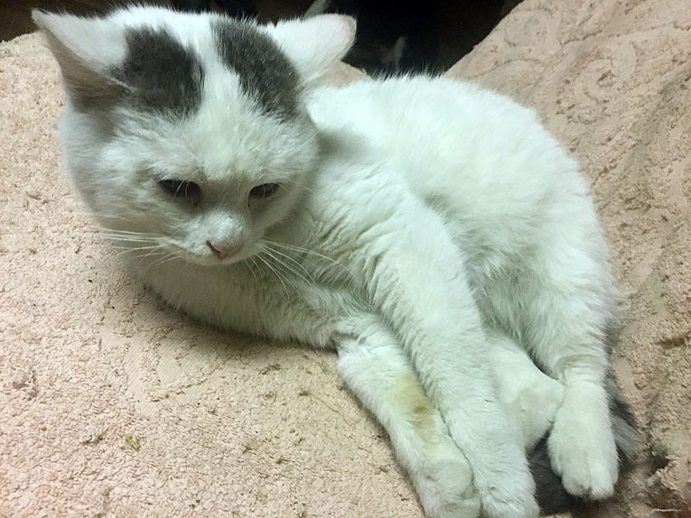 Необычайно ласковый кот Мякиш в дар