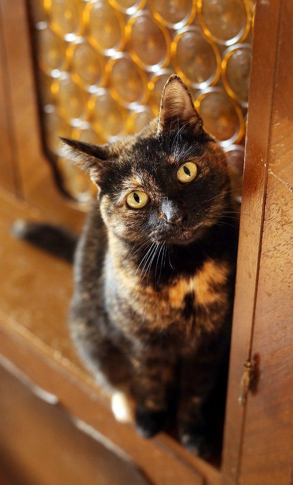 Ласковая красавица-кошка Машка в дар