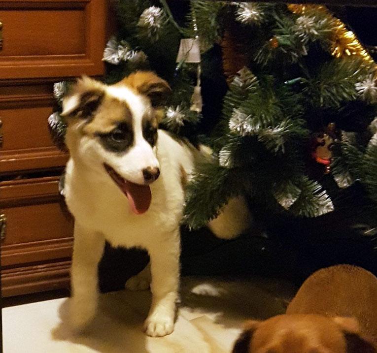 Отдам крупного игривого щенка-девочку в дар