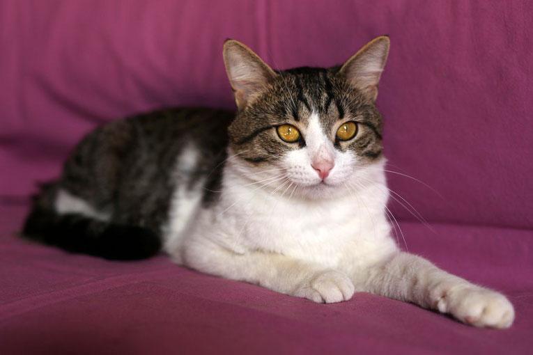 Молодой озорной котейка Фунтик в дар