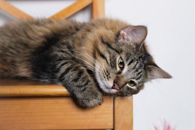 Чудесный домашний котик Подорожник ищет дом и доброе сердце