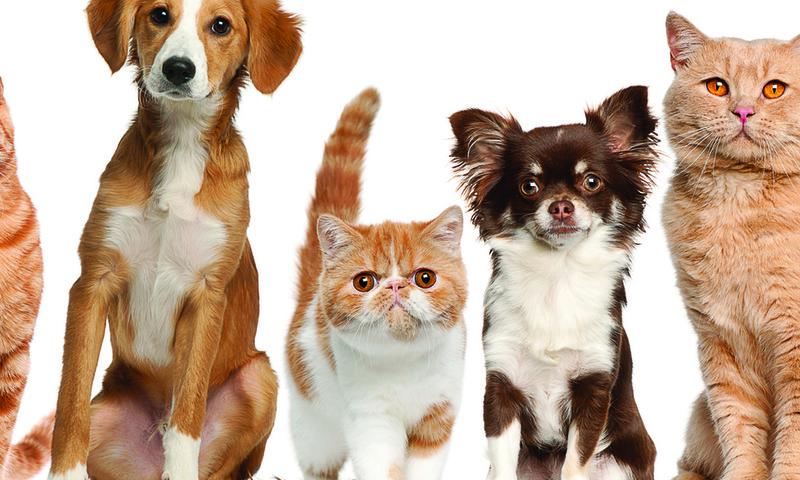 Ветеринарная вызывная служба  Динго   в Москве и Санкт-Петербурге.