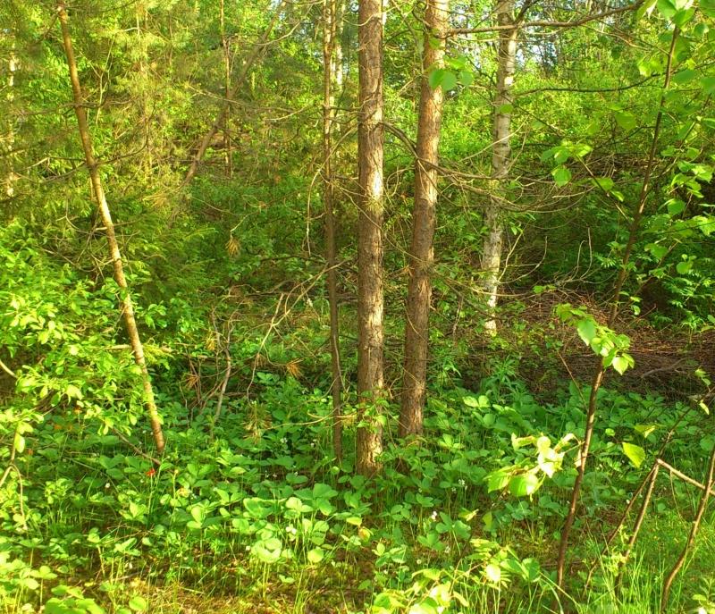 Продам земельный участок 14.5 соток, садоводство, Выборгский район в пос. Решетн