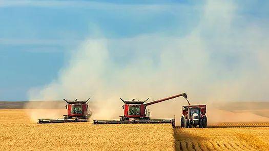 Продаем пшеницу фур .и прод., кукурузу, ячмень, овес.