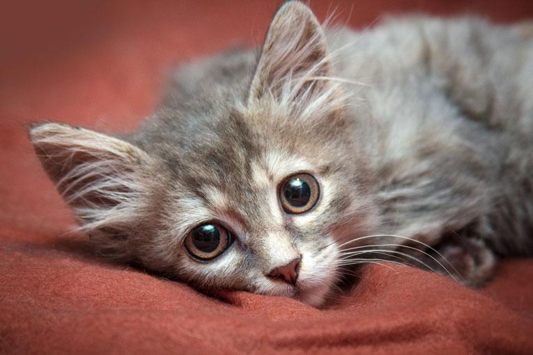 Рошель - котнок с удивительным взглядом в дар