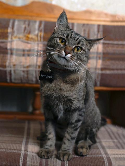 Красавица Соня, самая ласковая кошка на свете в добрые руки