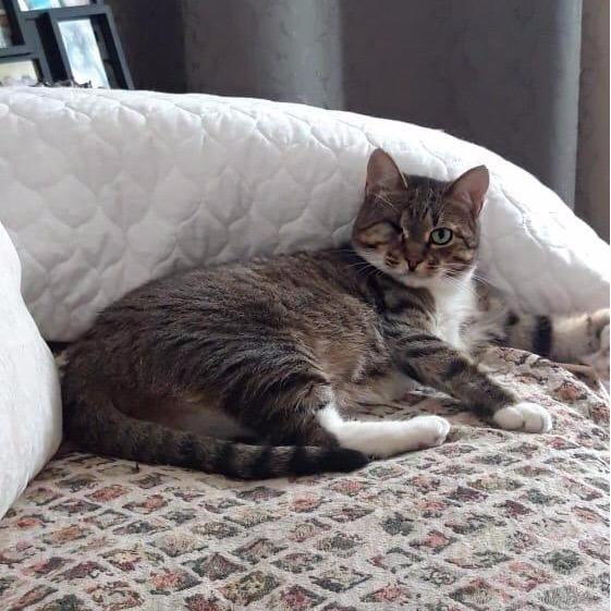 Кошка Кари ищет Дом.
