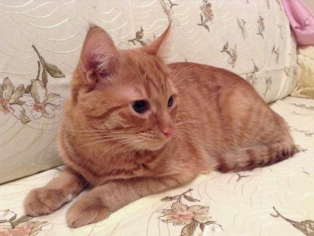 Котик-подросток Нолик, нежный, ласковый, трогательный мальчик в добрые руки