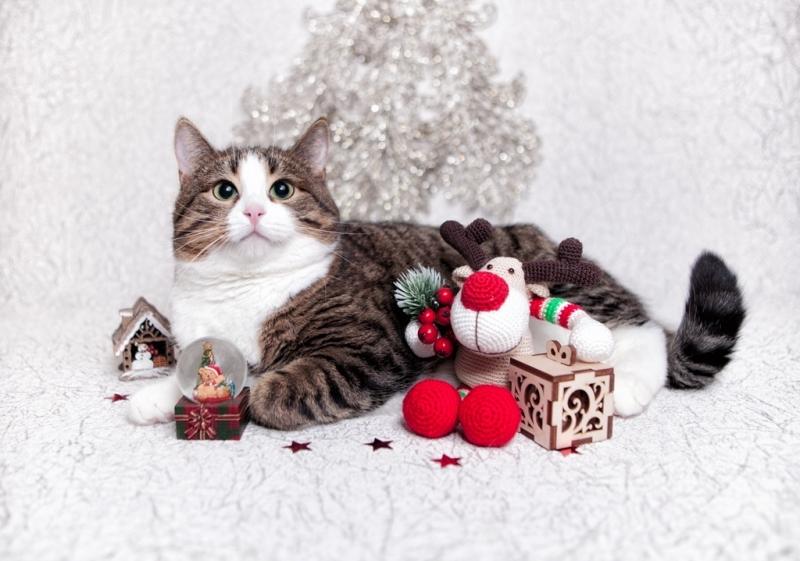 Настя - молодая котодамочка очень приятной наружности в дар