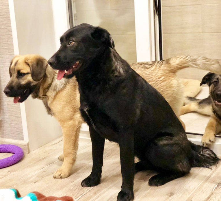 Ласковая собака ищет семью