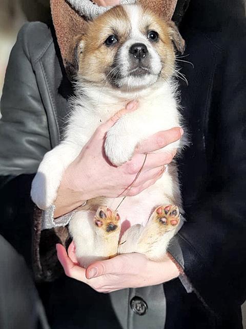 Очаровательные домашние щенки от некрупной собачки в добрые руки