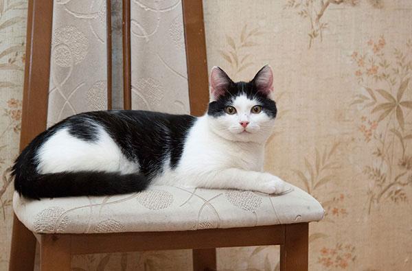 Мурчаливый котик Саша в дар. Можно к собакам или кошкам