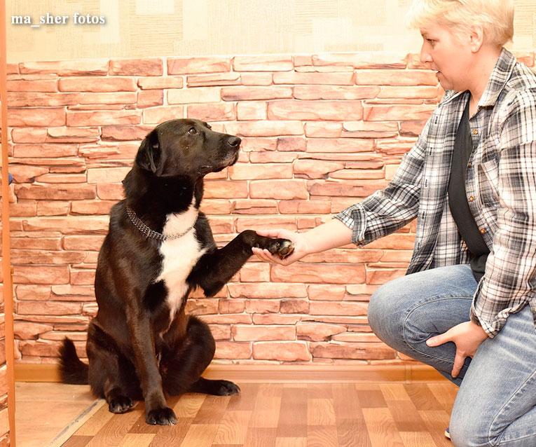 Очень ласковый и воспитанный пс Мишутка в добрые руки