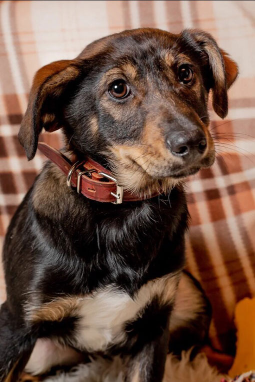 Некрупный щенок Виста в добрые руки с доставкой