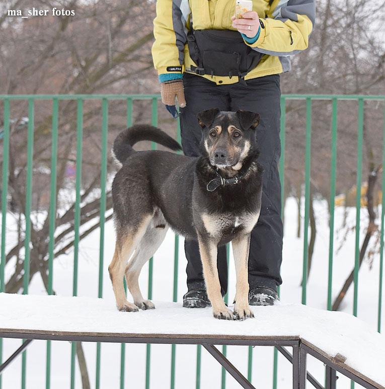 Сильный молодой пс Цезарь в дар. Любит детей