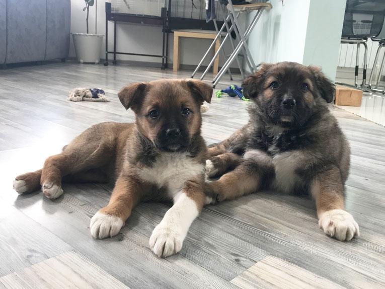 Очень милые щенки ищут добрые руки