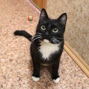 Сильный и трогательный котик Тимоша ждт свою семью