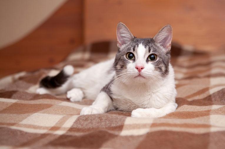 Ласковый и веслый котик Марсик в добрые руки. 10 месяцев