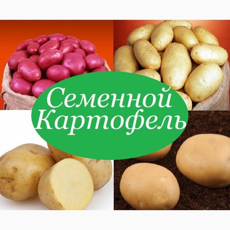 Продам картофель посевной посадочный