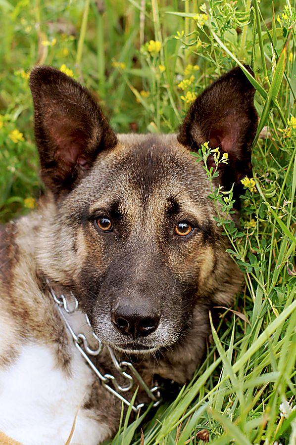Молодой пес Эдмунд в дар