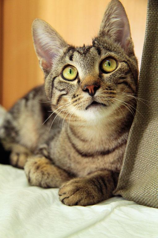 Нежнейший и игривый котик Лаки в добрые руки. 8 месяцев