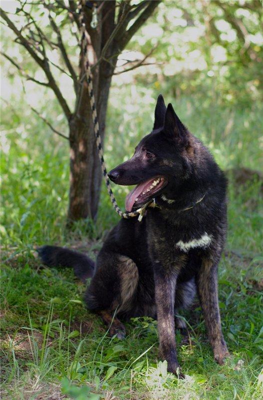 Собака для достойного хозяина