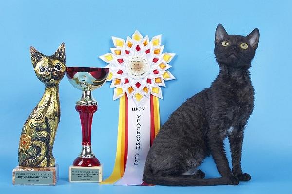 кошка порода