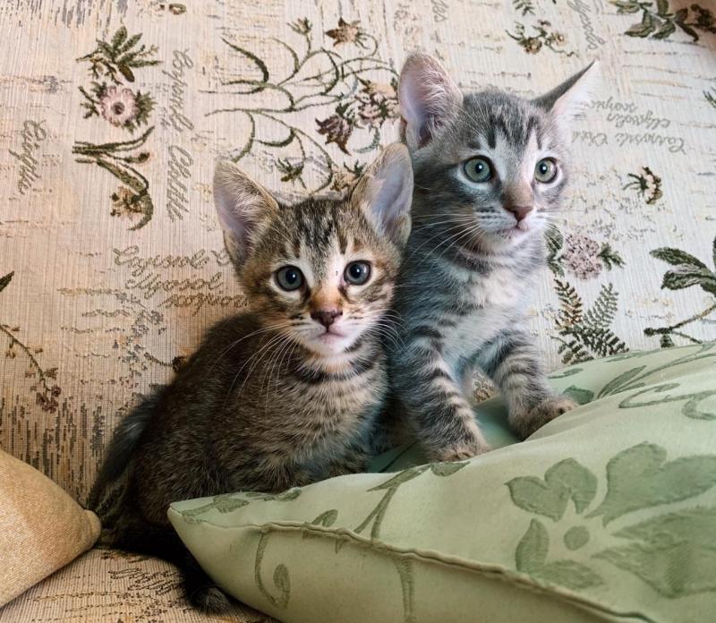 Очаровательные домашние котята в дар