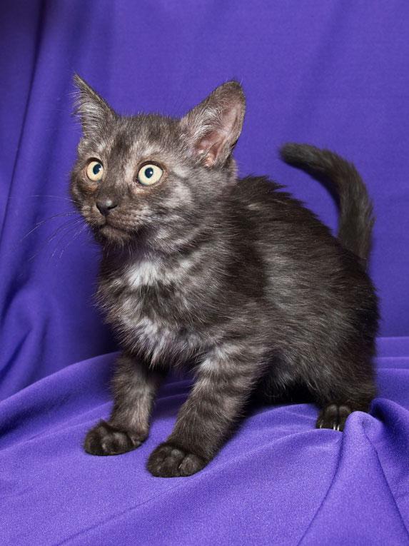 Красивые и ласковые котята в добрые руки