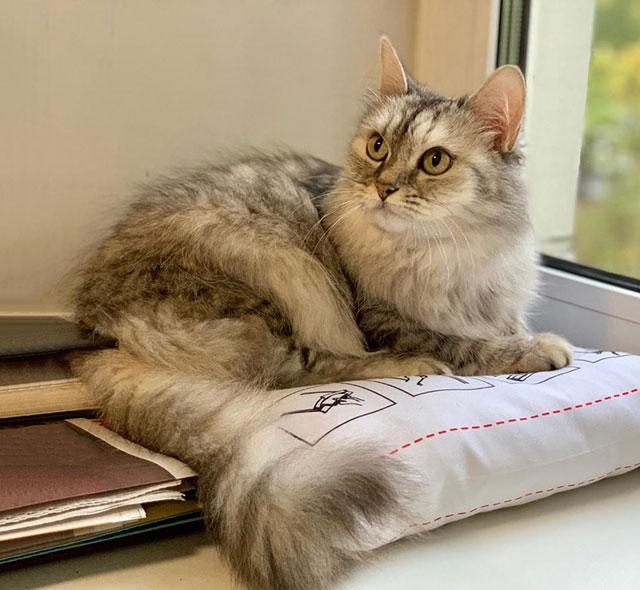 Красавица Санчо, добрая и умная домашняя кошечка в добрые руки