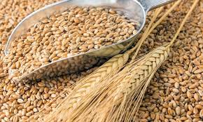 Куплю зерно оптом
