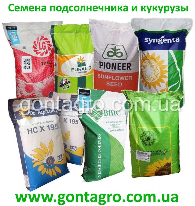 Семена подсолнечника устойчивого гербициду Гранстар и Евролайтинг 7 рас заразихи