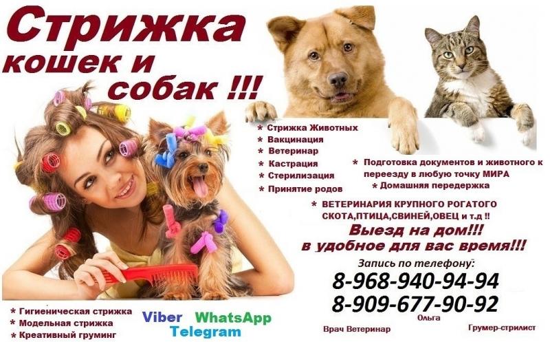 Стрижка кошек и собак выезд в Москве,домашняя передержка