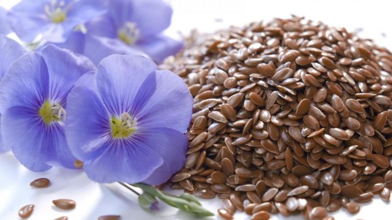 Семена льна масличного сорта ВНИИМК 620, Ручеек, Небесный, Бирюза и др.